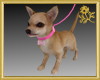 Chihuahua w/Leash