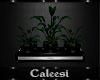 Dark Solace Plant 2
