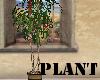(A)Plant~Fern Twig