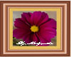 Dahlia framed picture