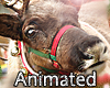 BD* Reindeer Animated