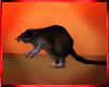 Mz. Rat/funny