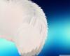 Popo tail ver 2 C: