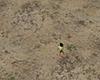 plane sand land