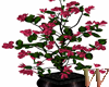Flowery Plant