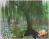 Water Lilies Willow Tree