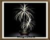 ~MG~ Karalee Plant