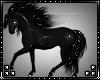 M: Horse Black