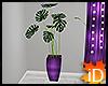 iD: DMac Plant