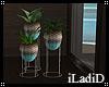 Paradise Plant