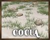 Cocua Beach Grass & Rock