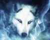 Wolf Portal