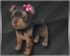 Terrier Puppy
