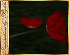 I~Red Roses & Petals