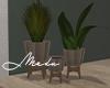 Ceramic Base Plants
