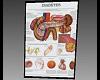MJs Medical Chart 1