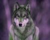 SM Wolf Sticker 1