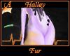 Halley Fur A
