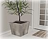 [Luv] Plant 1