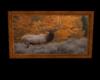 [W]Elk Picture 1