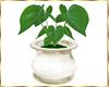 PETIT VERSAILLES PLANT 3