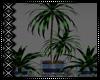 Aqua Dreams Plant 1