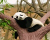 Room Art Panda