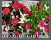 AM:: Japanese Rose Enh