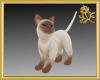 Siamese Cat Pet