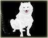 White amazing dog
