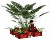 love pots plant