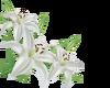 White Tulips -L