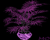 *MS*PurpleDiamonds Plant