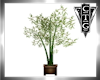 CTG BAMBOO IN PLANTER