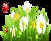 Spring Flowers-1