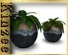 Plant Pot duo