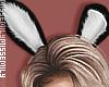 PlayBoy | Ears