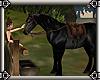 ~E- Pander's Horse