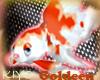 [Kiyo]PokePet Gold-neen