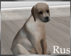 Rus: Bailey The Dog