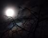 Creepy moon background