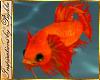 I~Angel Fish*Fire