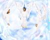 ~C~Angels Play