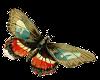 grn butterfly