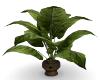 Houseplant 1