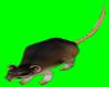 [AR]IMVU Rat