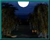 (A) Moon Lite Cove