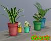 Simple Home Plants