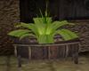 Tavern Plant barrel