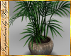 I~Glass Palm Plant